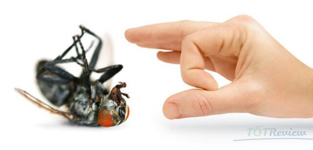 Thuốc diệt ruồi tốt nhất